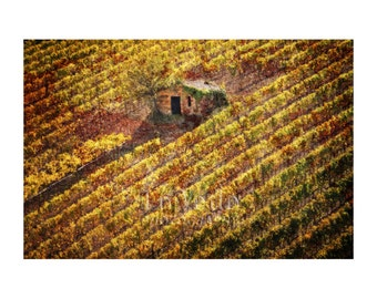 Stone Cottage Photo, Tuscan Vineyard, Rustic Home Decor, Autumn Colors, Tuscan Gold, Italy