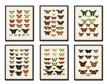 Vintage Butterfly Print Set No. 1, Art Print, Giclee, Print Set, Nature Art, Butterfly Print, Insect Art, Wall Art, Scientific Illustration