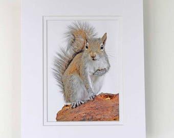 Photograph - 5 x 7 - Brown Squirrel