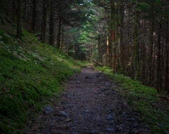 Appalachian Trail #2 - GSMNP - Great Smoky Mountains National Park - Hiking - Nature - Landscape - Tennessee - Fine Art - Appalachian Trail