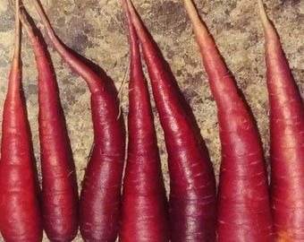 Dragon Carrots  50+ seeds, OP/Heirloom red carrot seeds