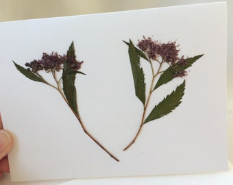 Pressed Dried Purple Aster Flowers Leaves Card All Any Occasion Blank Handmade Aster Floral Nature Art Stationery Anniversary Birthday Card