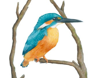 Watercolor Painting Bird Art Kingfisher Archival Print 5x7 8x10 11x14