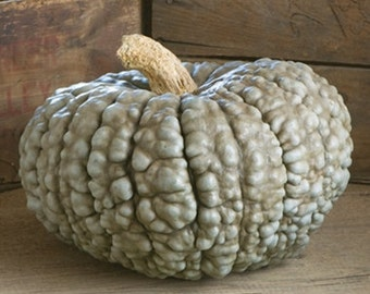VSQW)~MARINA de CHIOGGIA Squash~Seed!!!!~~~~Cheese wheel Type Heirloom!