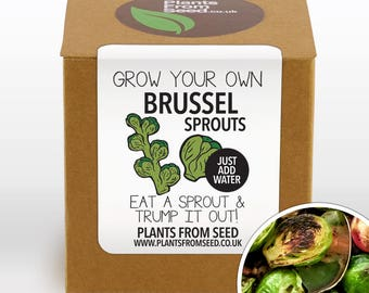 Grow Your Own Brussel Sprouts Plant Kit