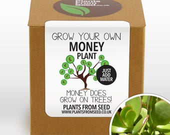 Grow Your Own Money Plant Kit