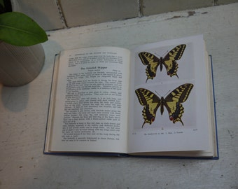 Vintage butterflies & Moths of the Wayside - 1943 Edition