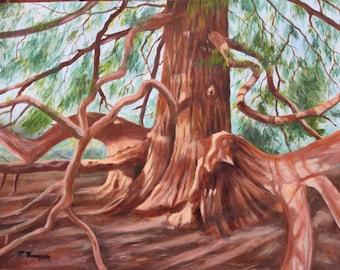 "Original Oil Painting ""Giant Redwood Tree"""