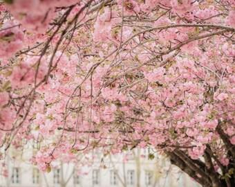Paris Photograph, Spring in Paris, Notre Dame Cherry Blossoms, Pink Paris Wall Art, Cherry Blossom Paris Photo, April in Paris