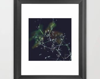 Beautiful Plant,Printable Photography,Home Decoration,Instant Download,Minimalist Photography