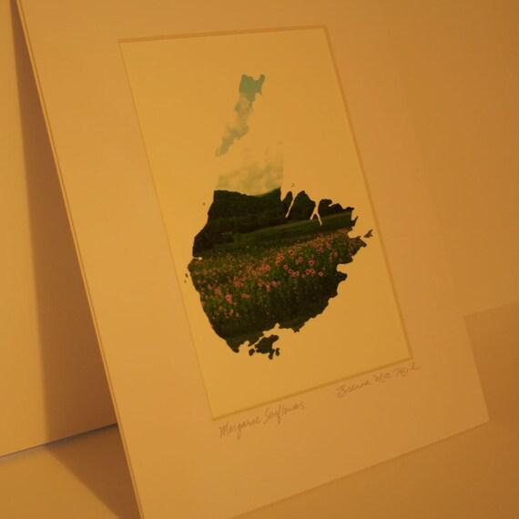 Margaree Sunflowers - Cape Breton Island