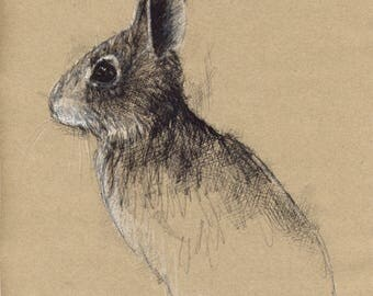 Young rabbit | Limited edition fine art print from original drawing. Free shipping.