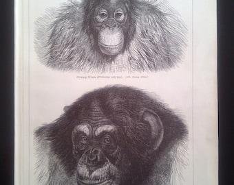 "Lithography, ""Monkey I.""."