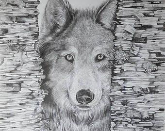 Wolf Drawing original wolf drawing pencil drawing graphite drawing Original Artwork Original Art Wolf Art