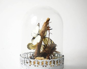 Small vintage glass dome with Real dried butterflies entomology insects