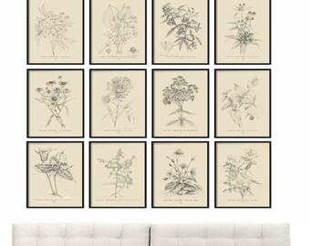 Antique Botanical Print Set of 12 - Botanical Vintage Prints, Botanical Print Set, Vintage Botanical Prints, Poster - Black Plates Diagrams