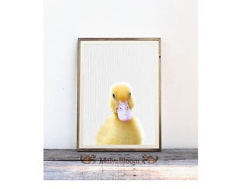 Baby Duck Peekaboo Print, Cute Yellow Duckling  Large Wall Nursery Art, Baby Animal Poster, Kids Decor, Duck Photography