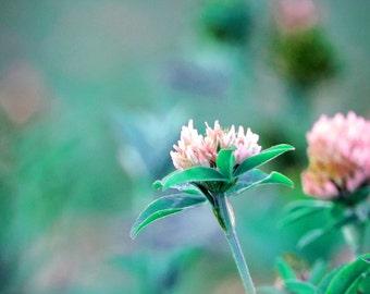 Photographie des fleurs d'été / The summer flowers Fine Art Photography / Printed Photography