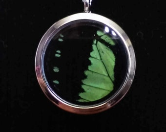 Iridescent Green Butterfly Wing Necklace