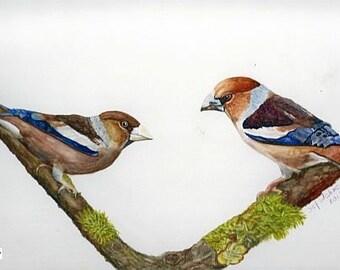 Fine art painting, watercolor, birds, torque Apple finches