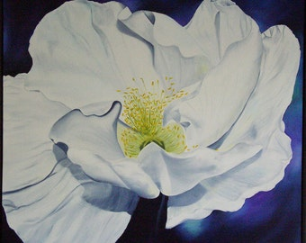 White Poppy Flower Painting