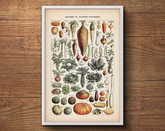 French vegetable print, Botanical print, Botanical illustration, Vintage botanical art, Botanical poster, Kitchen art, Kitchen decor
