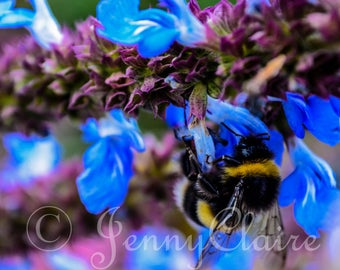Bumble bee high resolution digital download