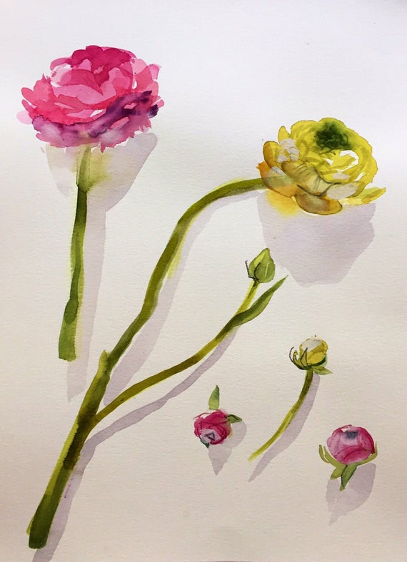 Watercolor painting -Ranunculus Flower Study- original floral watercolor