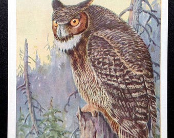 Great Horned Owl Vintage National Audubon Society Winter Bird Card