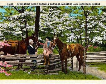 Vintage Springtime Postcard - Dogwood Blossoms and Horseback Riding (Unused)