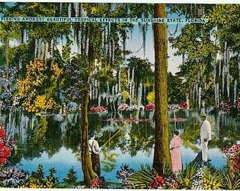 Vintage Florida Postcard - Fishing on a Florida River (Unused)