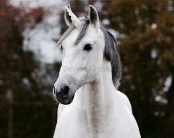 Unicorn Horn for Horses or Ponies