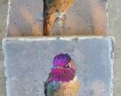 Hummingbird Stone Photo Coasters - Most Popular Hummingbird Gifts - Sunset Purple Hummingbird Coasters - Ready to Ship