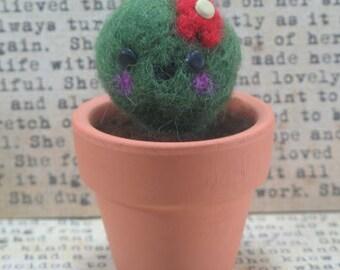 Needlefelt Cactus