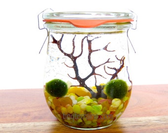 Weck Tulip Jar Marimo Terrarium - Several Colors Available