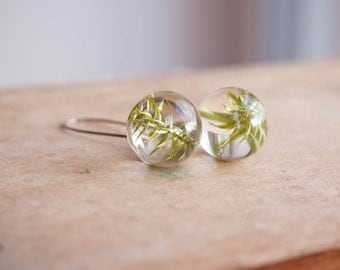 SALE - Real Plant earrings - Long dangle earrings - clubmoss plant gift for nature lovers
