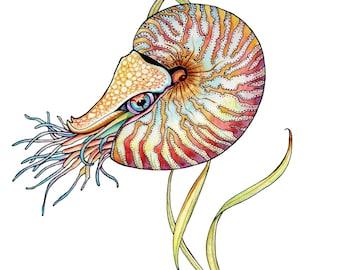 Nautilus Watercolor Greeting Card