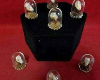 Taxidermy bat skull-Pipistrellus-glass dome display-bones/head/skeleton