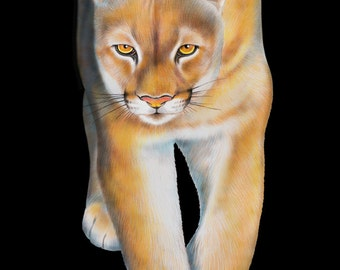 Cougar Colored Pencil Drawing