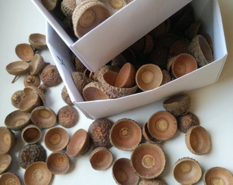 Acorn caps. Mix of sizes and types. Without twigs. White Oak. 50 pcs. 100 pcs. 200 pcs. (natural acorn tops/ real acorn caps)