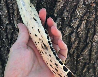 Handmade Gator Jaw Bone Dagger by David Semones 4-25-7-17
