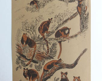 Tree Kangaroos screen print - illustrated screenprint - animal art - hand printed silk screen art - tree kangaroo illustration - unframed