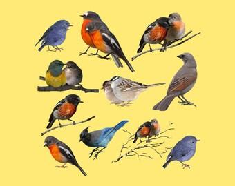 Winter Birds Clipart, Birds Clipart, Birds Clip Art, Clipart Birds, Clip Art Birds, Bird Clipart, Bird Clip Art, Birds PNG, PNG Birds