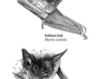 Endangered Bats Art Print