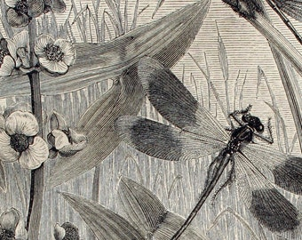 Dragonflies and Insects, 1890, Vintage Zoological Print, German Lithography, Home Decor, Meyer, Konversations Lexikon