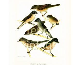 1961 Warbler, Wood Warbler, Leaf Warbler, vintage Bird Print, Ornithology, nature wall art