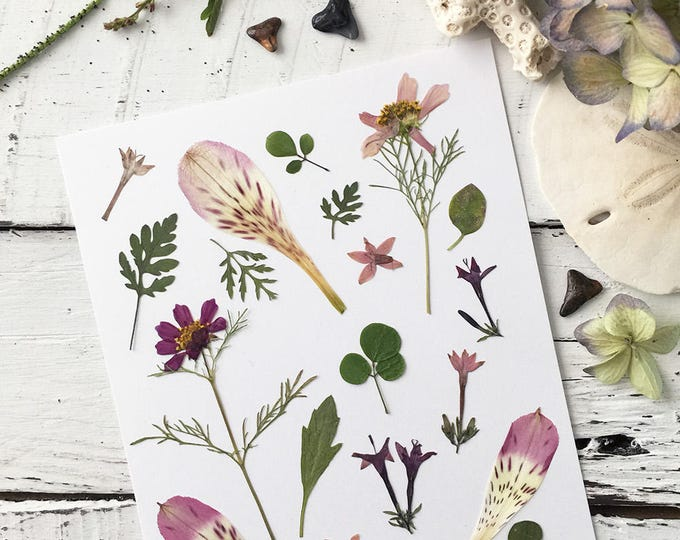 Real Pressed Flowers:  Variety of Flowers & Leaves > Natural - Dye Free - Biodegradable - Cruelty Free - ECO Friendly