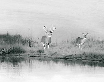 Wildlife Art Print, Black and White Art, Deer in Winter, Deer in Snow, Winter Pond, White Tail Deer, Winter Landscape, Fine Art Photography