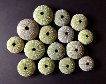 15 green sea urchins - lovely sea treasures / 4-5cm / real urchin shells for crafts, collection & DIY artworks - beach wedding decor