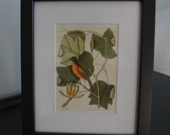Framed Bird Postcard